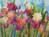 Iris Garden 1